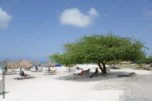 Платно Divi-Divi Tree on Aruba Beach