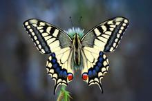 Beautiful Butterfly & Flower In The Garden.