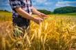 Rolnik na polu ze zbożem