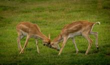Wild Animals In Werribee  Safari