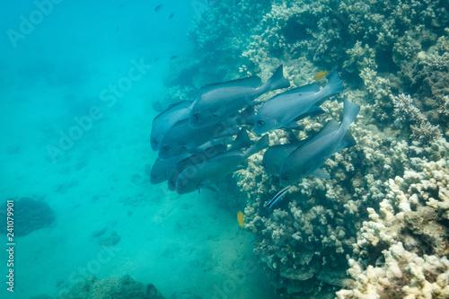 Obraz na dibondzie (fotoboard) Szkoła dużych ryb