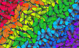 Fototapeta Tęcza - Colors of rainbow. Pattern of multicolored butterflies morpho, texture background. multicolored natural abstract pattern