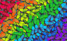Colors Of Rainbow. Pattern Of Multicolored Butterflies Morpho, Texture Background. Multicolored Natural Abstract Pattern