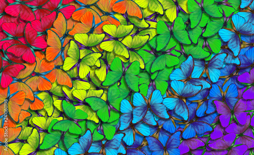 Cadres-photo bureau Papillon Colors of rainbow. Pattern of multicolored butterflies morpho, texture background. multicolored natural abstract pattern
