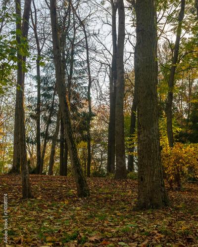 Papiers peints Foret brouillard Autumn in the Forest