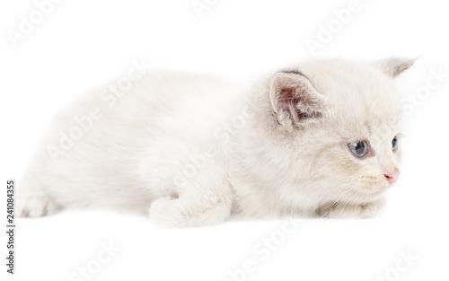 In de dag Ijsbeer Portrait of a kitten on a white background