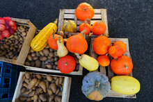 Colorful Decorative Pumpkins And Gourds In The Fall