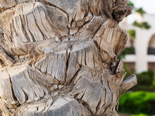 Date Fruit Palm Tree Trunk Texture, Macro
