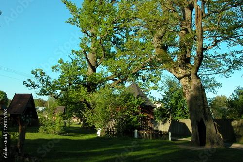 Spoed Fotobehang Begraafplaats Roztoczanski Park Narodowy