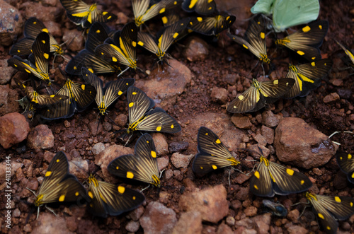 Fotografie, Obraz  Insetos borboleta bug