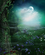Enchanting Fairy Forest Openin...