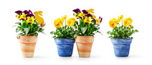 Pansy Flowers And Easter Bunny In Flowerpot Set