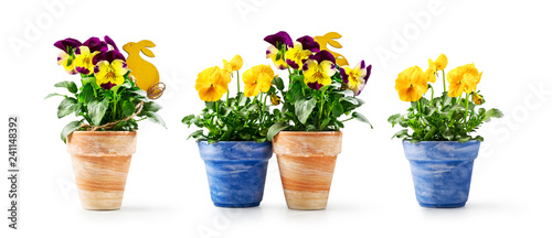 Papiers peints Pansies Pansy flowers and easter bunny in flowerpot set