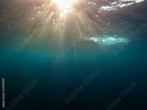 Plakat ludzie z Morza Czerwonego pływają pod wodą