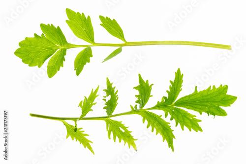 Foto  foglie di valeriana