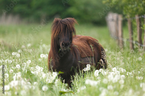 Photo Pony in hoher Wiese