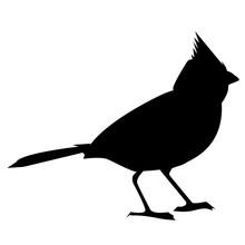 Animal-Cardinal Bird Silhouette