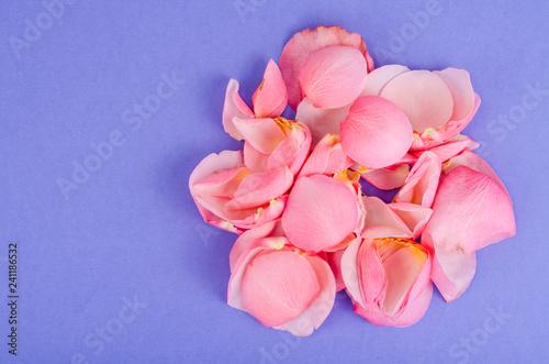 Spoed Foto op Canvas Frangipani Pink rose petals on bright background