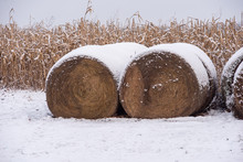Two Bales Of Hay Covered In Snow