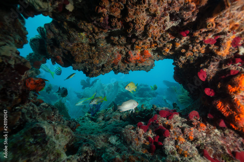Beautiful coral reef in the Atlantic Ocean. Located near Key West, Florida, United States.