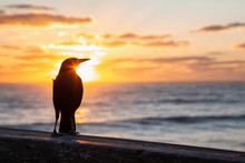 Sea Bird Sitting On A Wooden Pier By The Ocean During A Vibrant Cloudy Sunrise. Taken In Daytona Beach, Florida, United States.