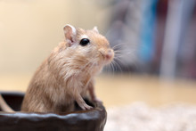 Cute Adorable Gerbil Hamster Mouse Standing Up