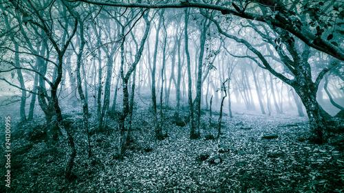 Fotografie, Obraz  A cold quiet forest
