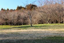 冬 枯れ木