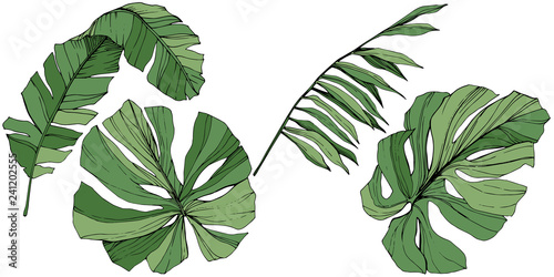 Fototapeta Exotic tropical hawaiian summer. Green engraved ink art. Isolated leaf illustration element. obraz