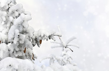 Sprigs Of Christmas Tree With Cones ( Spruce, Fir, Fir-tree ) Covered Snow On A Background Cloudy Sky With Space For Text. Christmas Background