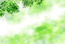 春の新緑(光輝く若葉)