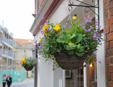 Flowering Hanging Baskets In Town