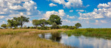 Fototapeta Sawanna - Typical african landscape with wild river in national park Bwabwata on Caprivi Strip, Namibia wilderness