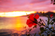 Leinwanddruck Bild Tropical flowers