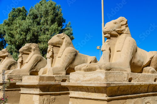 Deurstickers Historisch mon. Avenue of the ram-headed Sphinxes in a Karnak Temple. Luxor, Egypt