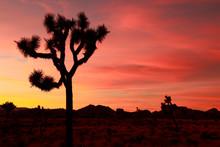 Desert Sunset With Joshua Tree Silhouette