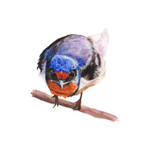 Bird Watercolor Painting ,Print Wall Art ,Hand Painted.Bird Illustration Isolated On White Background.