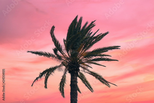 In de dag Candy roze silhouette tropical palm tree with sun light on sunset sky. Copy space. Summer vacation and travel concept.