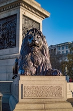 Bronze Lion Statue At Trafalgar Square Below The Nelson Column