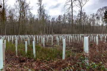 Schutz für junge Bäume