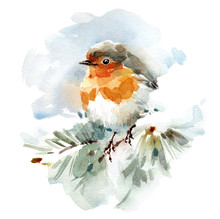 Watercolor Bird Robin On The S...