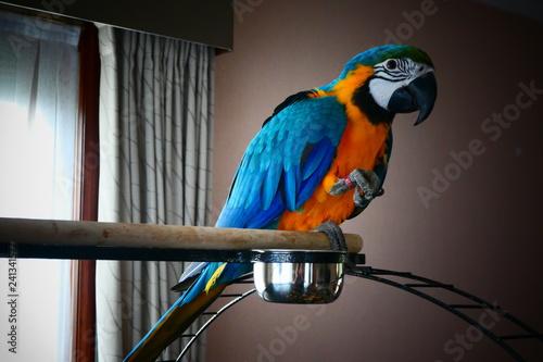 Garden Poster Parrot Pappegaai papegaai Ara geel bauw