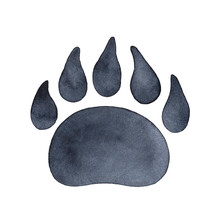 Bear Paw Print Watercolour Ill...