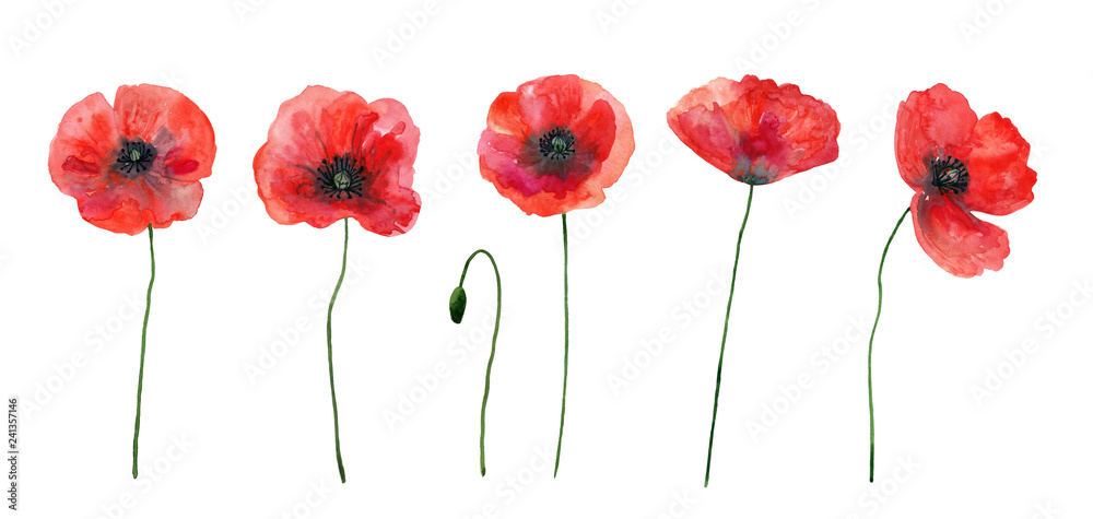 Fototapety, obrazy: Set of red poppies. Colorful flowers. Watercolor hand drawn illustration isolated on white background.