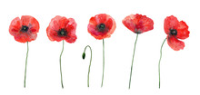 Set Of Red Poppies. Colorful F...