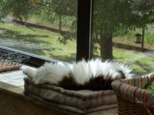 Gatos Tranquilos