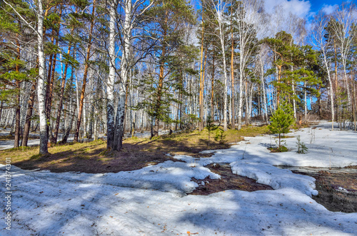 Early spring landscape in forest with melting snow and brook