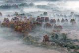 Tutti i colori dell'autunno sulla foresta con nebbia - 241380309