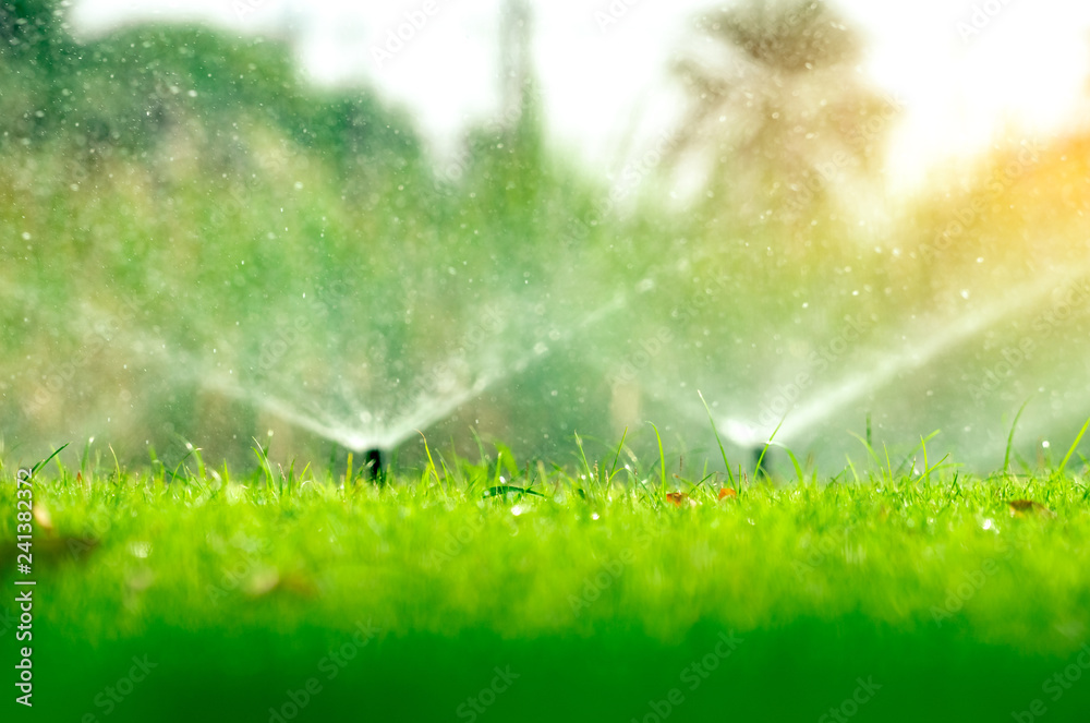 Fototapety, obrazy: Automatic lawn sprinkler watering green grass. Sprinkler with automatic system. Garden irrigation system watering lawn. Water saving or water conservation from sprinkler system with adjustable head.
