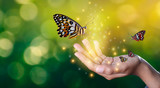 Butterflies are in the hands of girls with glittering lights sweet encounter between a human hand butterfly